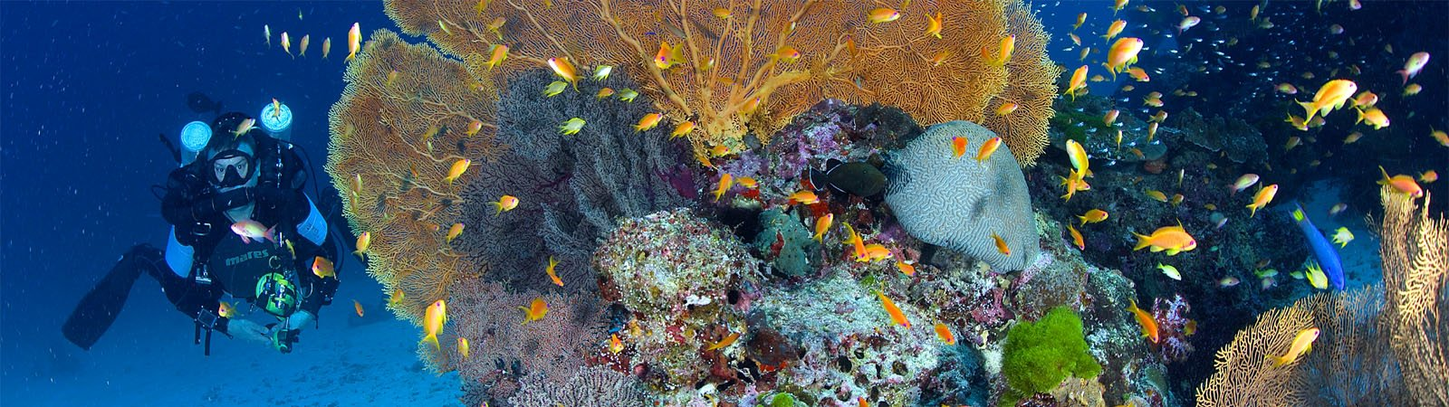 Diving trips Image