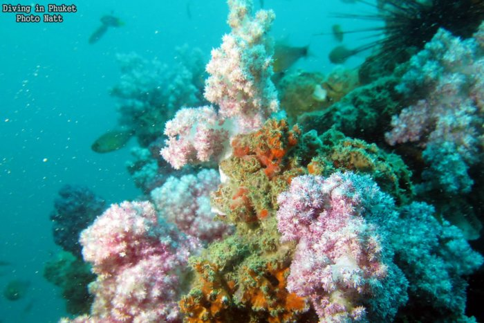 Leafy Soft Coral
